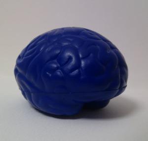 screenshot of a brain