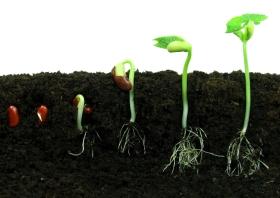 seeds, growth